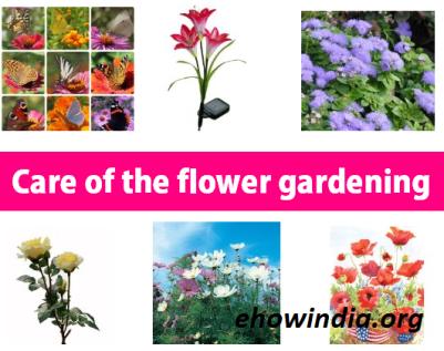 care-of-the-flower-garden